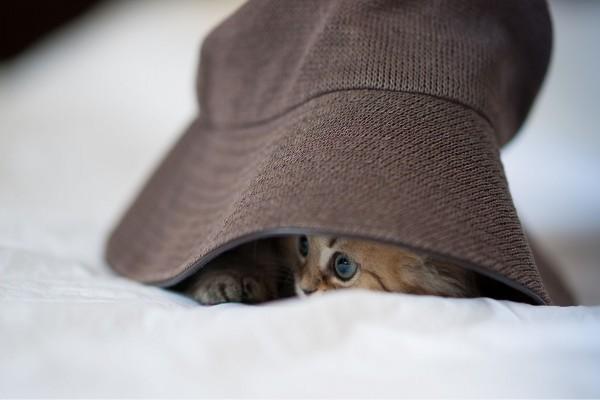 Un gatito bajo el sombrero