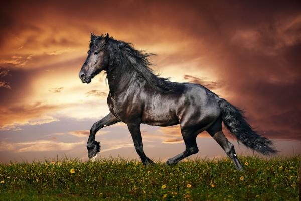 Un magnífico caballo negro