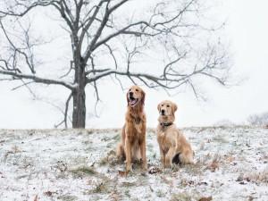 Dos perros sentados sobre la nieve