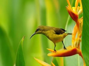 Postal: Pájaro con un pico fino, sobre una original flor