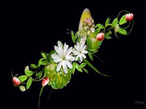 Postal: Flores y una mariposa
