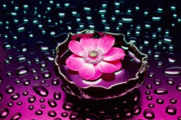 Una flor y gotas de agua