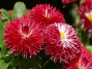 Flores con pétalos rojos