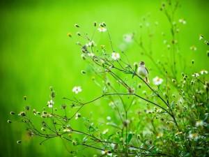 Postal: Pajarillo en las ramas de la planta