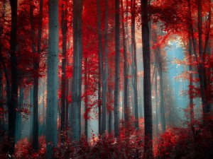 Postal: Bosque en otoño