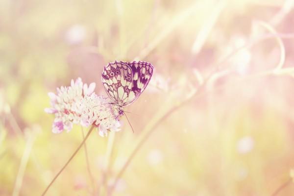 Mariposas en las florecillas blancas