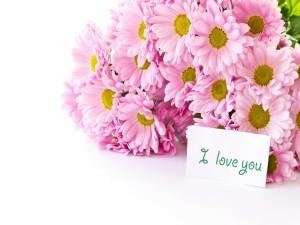 Postal: Margaritas rosas y un mensaje: Te quiero
