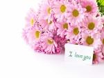 Margaritas rosas y un mensaje: Te quiero