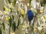 Pájaro de color azul en la rama