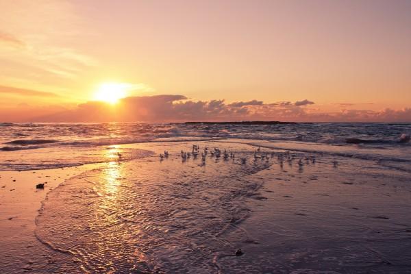 Gaviotas en la orilla del mar