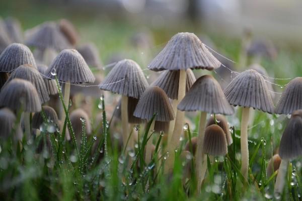 Setas entre la hierba con gotitas de agua