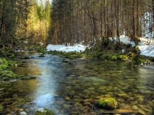 Río que corre entre piedras con musgo