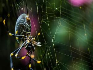 Postal: Gran araña tejiendo su tela