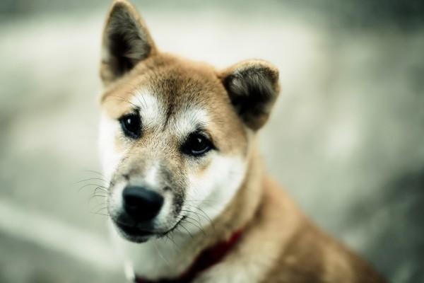 Perro con ojos negros