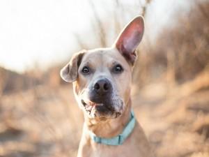 Un perro con la oreja levantada