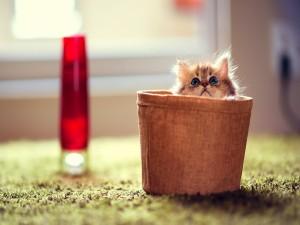 Postal: Gatito dentro de la cesta
