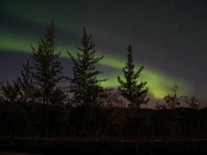 Aurora boreal sobre el bosque