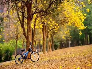 Postal: Bicicleta junto al árbol