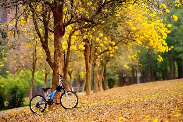 Bicicleta junto al árbol