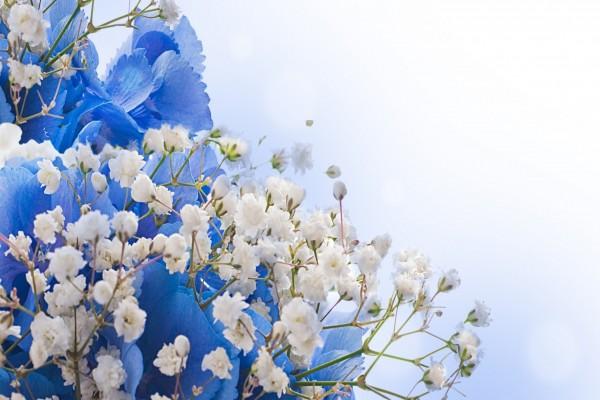 Flores blancas y azules