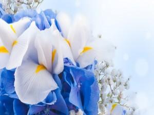 Ramo con flores blancas y azules