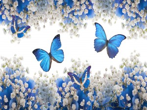 Postal: Mariposas entre las flores