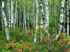 Flores en un bosque de abedules