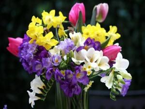 Postal: Ramo con narcisos, fresias y tulipanes