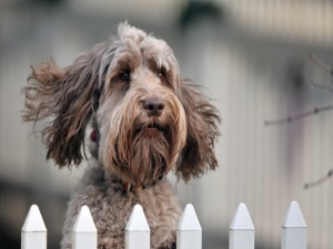 Postal: Un perro detrás de las rejas