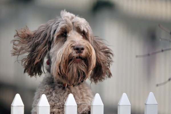 Un perro detrás de las rejas