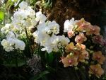 Orquídeas de varios colores