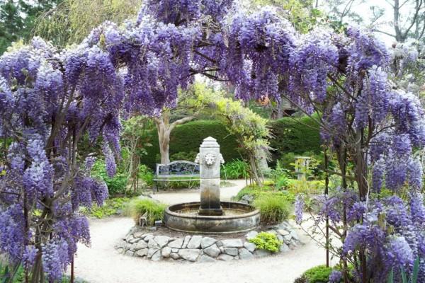 Jardín con una fuente, árboles y flores lilas