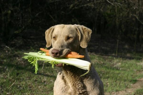 Perro con hortalizas en la boca