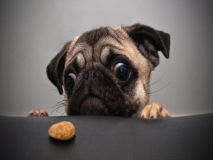 Quiero esa galleta