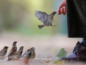 Postal: Dando de comer a los pájaros