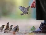 Dando de comer a los pájaros