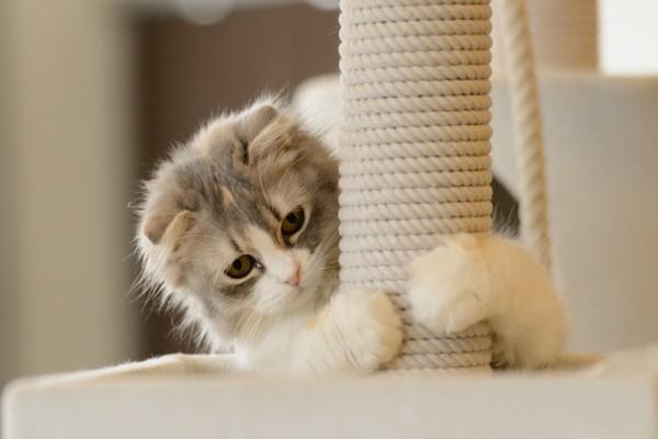Gatito afilando sus uñas
