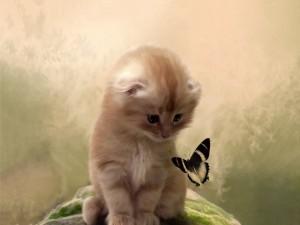 Postal: Gatito mirando a la mariposa