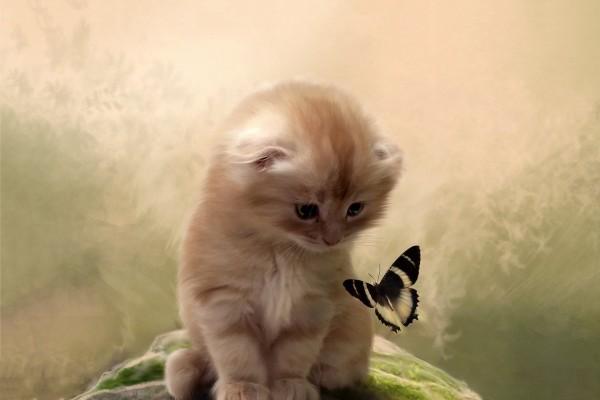 Gatito mirando a la mariposa