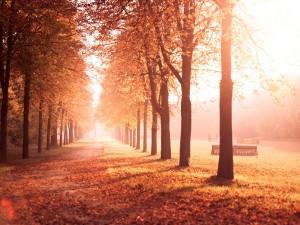 Arboleda en otoño