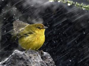 Postal: Pájaro afrontando la lluvia