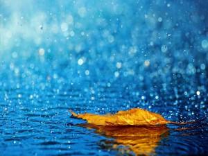 Postal: Hoja mojada por la lluvia