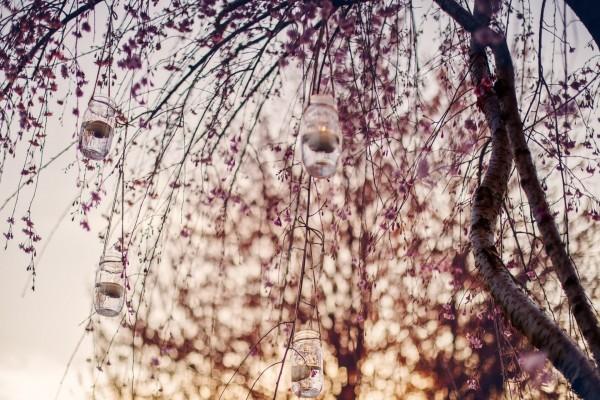 Velas en recipientes de vidrio, colgadas de las ramas de un árbol