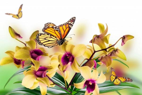 Mariposas volando entre las orquídeas