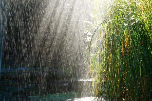 Lluvia sobre una planta verde