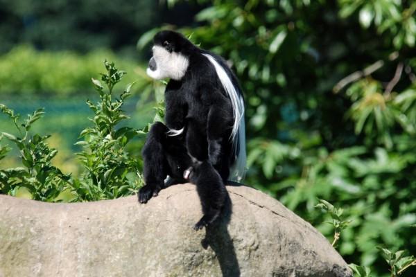 Mono sentado sobre una piedra