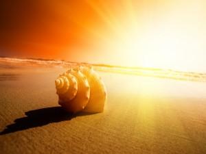 Caracola y rayos de sol en la playa