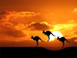 Postal: Canguros saltando al atardecer