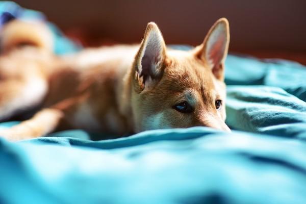 Un perro sobre la cama