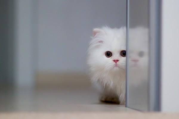 Un pequeño gato blanco